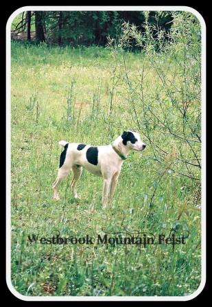 Westbrook Mountain Feist - Homestead Business Directory